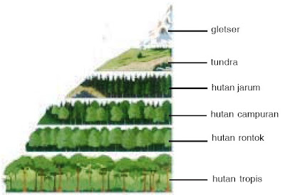 Relief (tinggi rendahnya permukaan bumi) berpengaruh terhadap tetumbuhan dan hewan.