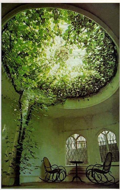 Pohon di tengah ruangan