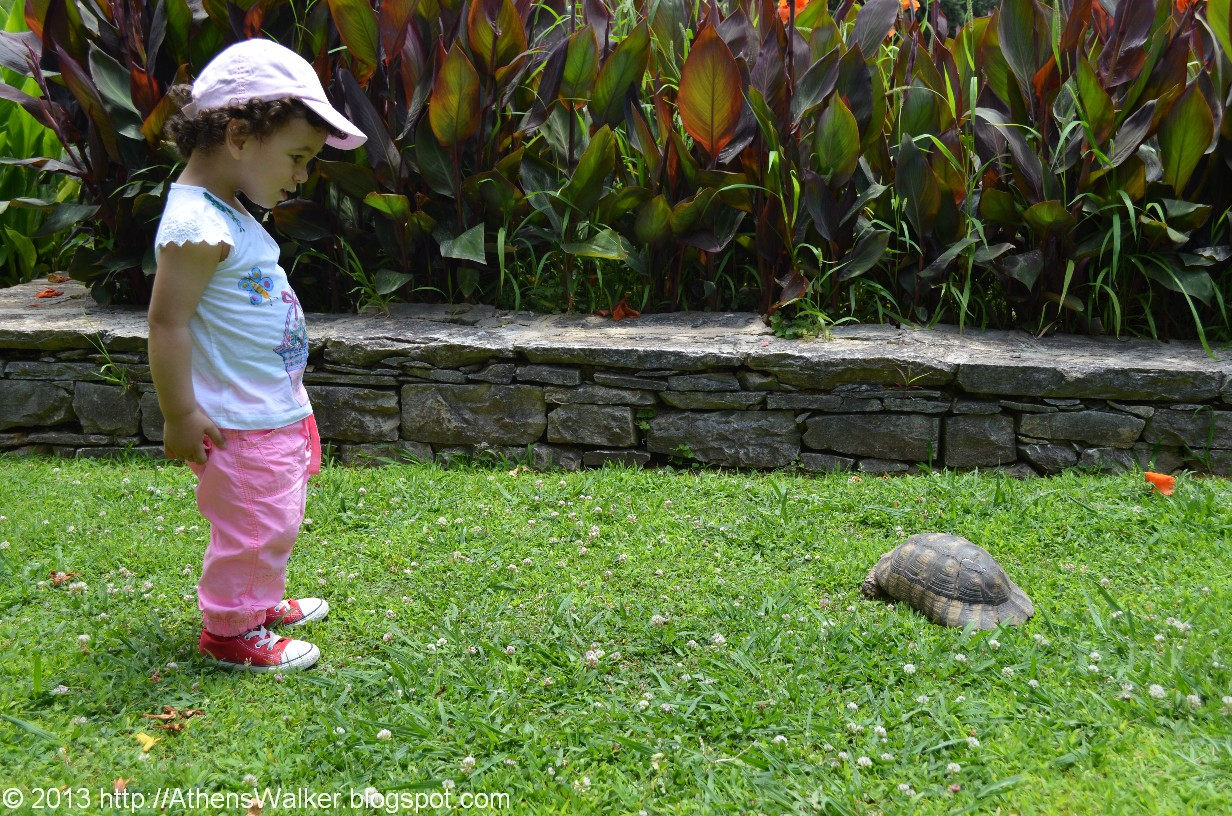 Baby Watching Turtle; Diomedes Botanic Garden, West Of Athens, Greece