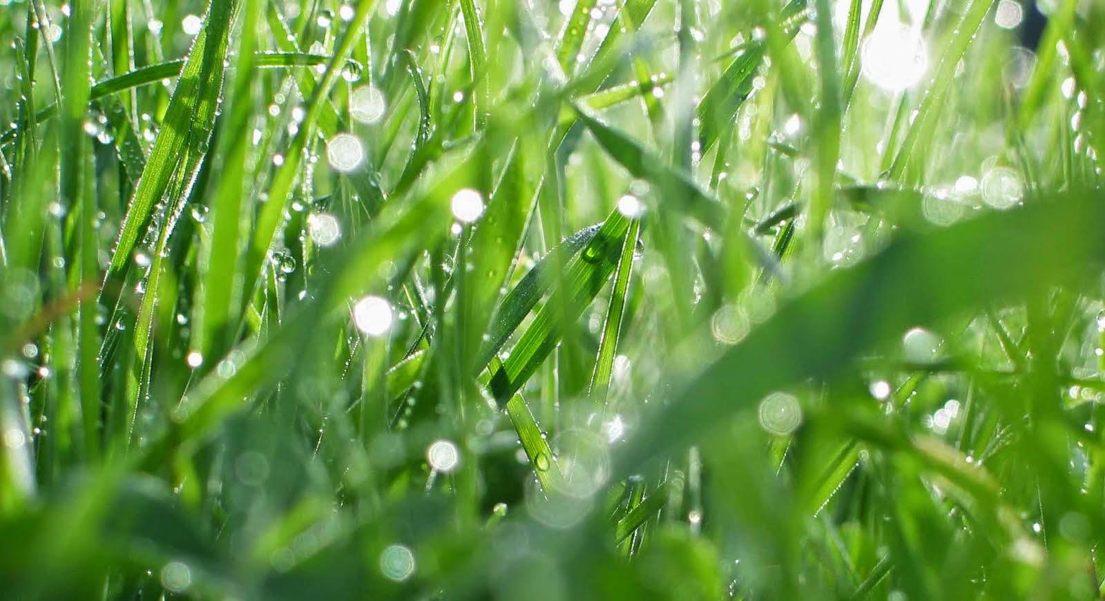 Grass Compost ! Tutorial
