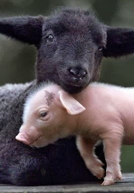 Pink pig with gray lamb