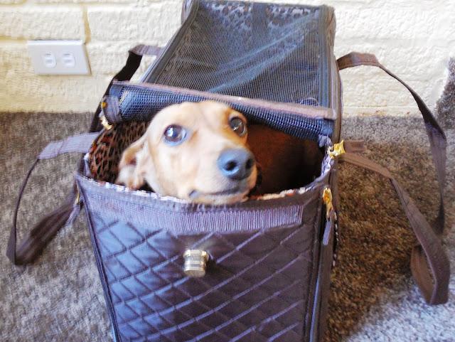 Quaker Sherpa Pet Carrier