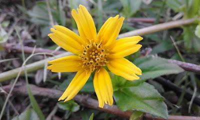 http://www.fotodoku.co.vu/2015/07/kumpulan-foto-foto-bunga-yang-cantik.html