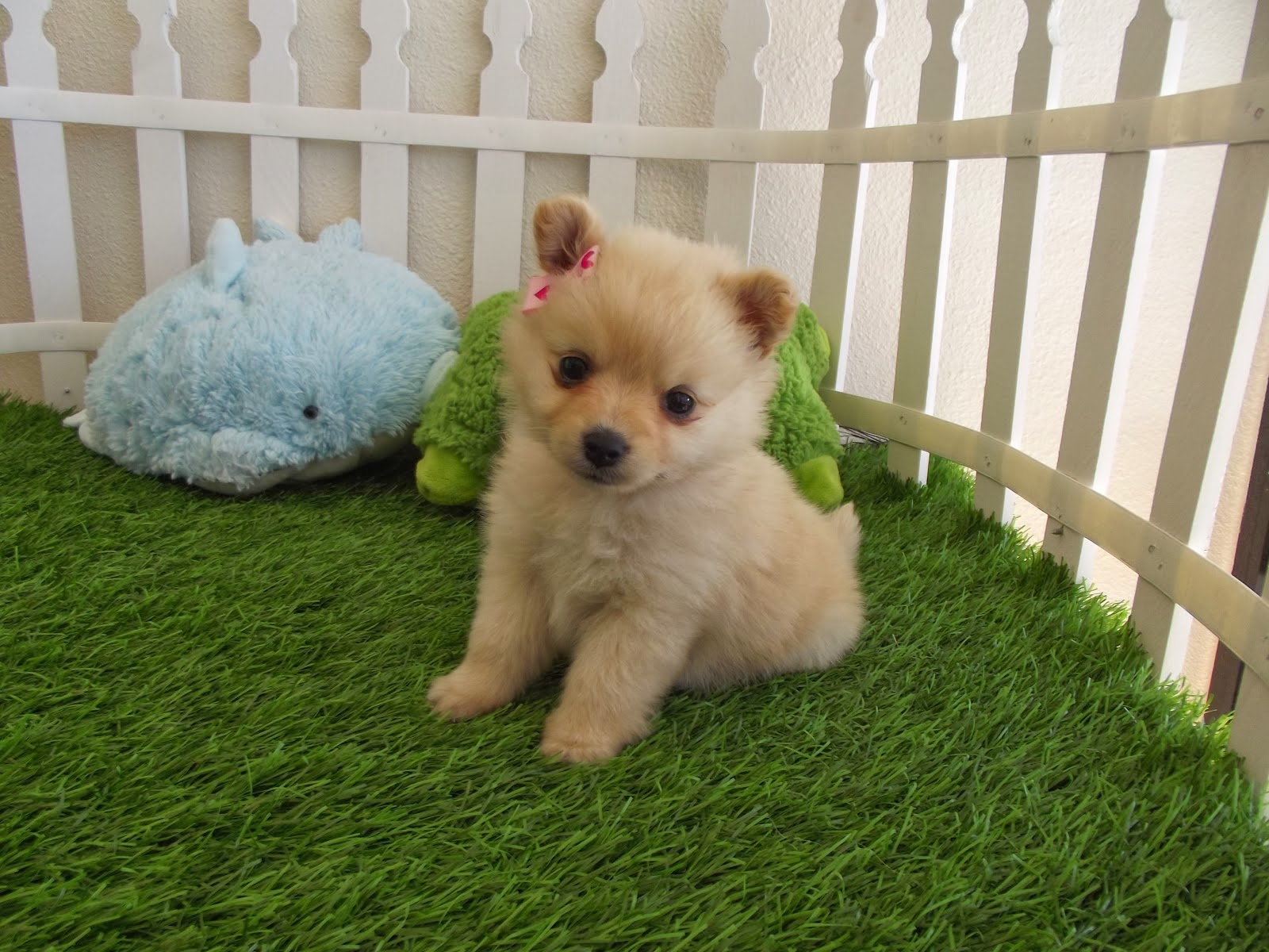 Cute Puppies HD WallpapersVery Cute Puppies Wallpapers