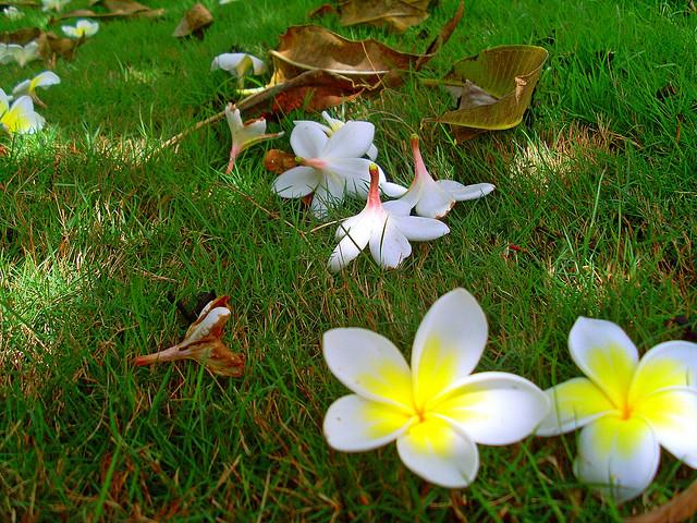 rosas no jardim poema : rosas no jardim poema:FLORES NO JARDIM: Ao cheiro das flores.
