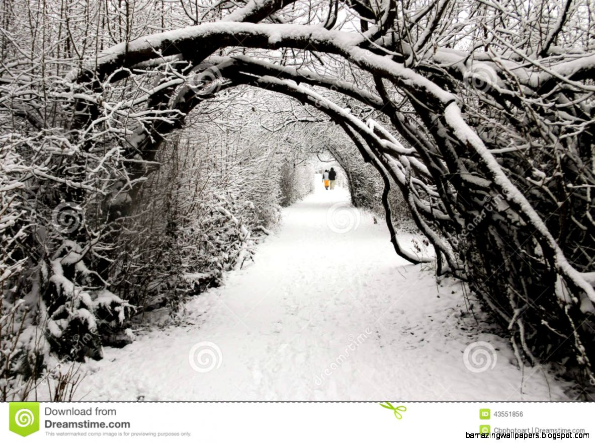 Walking In A Winter Wonderland Stock Photo   Image 43551856