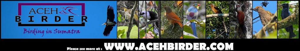 Birding in Sumatra - Aceh Birder BirdTour Sumatra