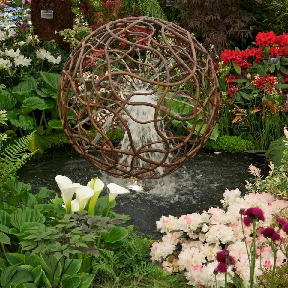 Photographer\'s Garden: Zantedeschia or Arum Lily