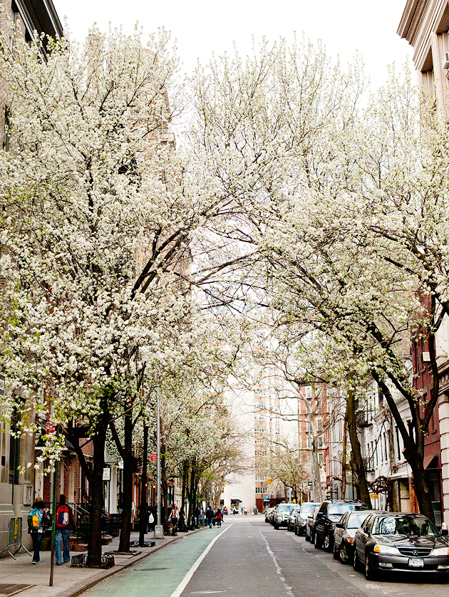 spring in the west village