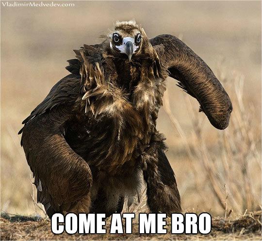 Eagle - Come At Me Bro