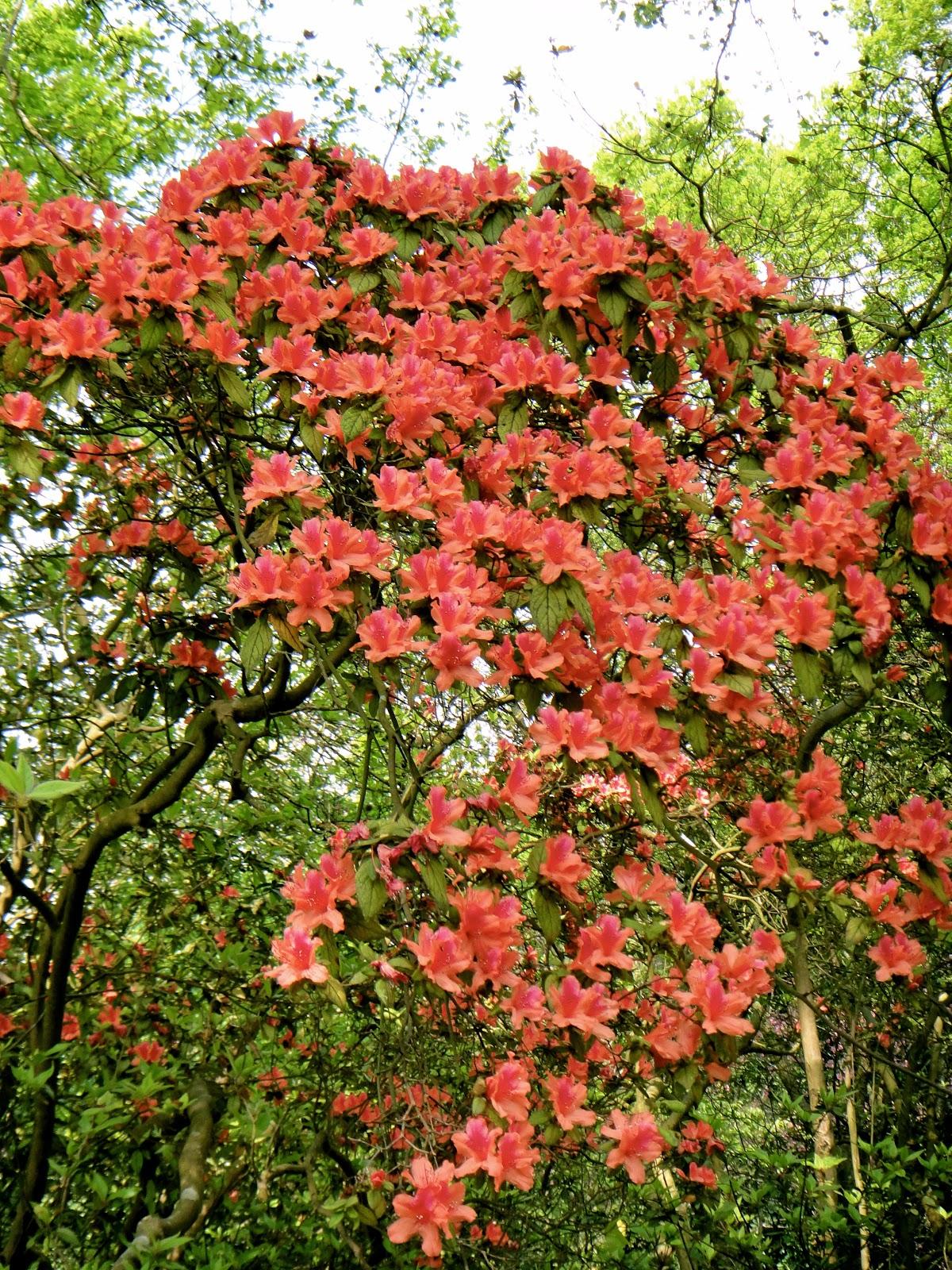 Yangmingshan Red Flowers Spring