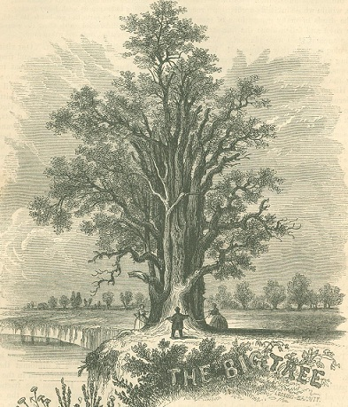 Digital history project american historical trees there have been no methuselahs since the flood mans maximum of life is a century only the elephant and the tortoise feebly imitate the longevity of the publicscrutiny Gallery