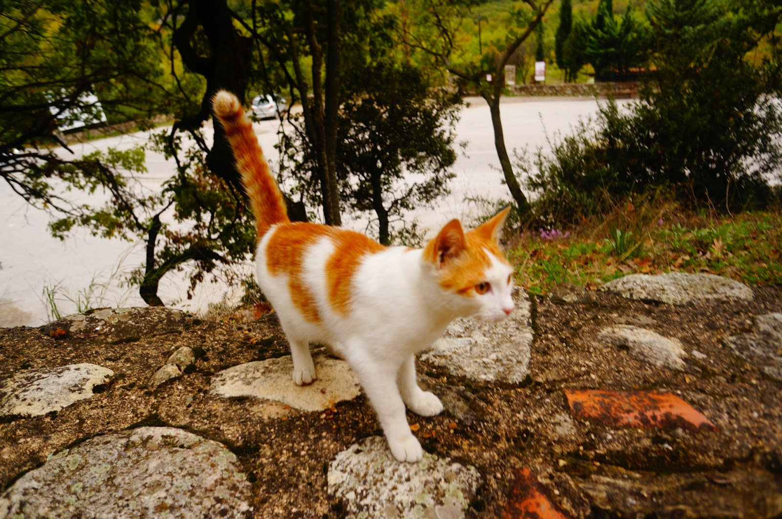 Red-Cat-Greece