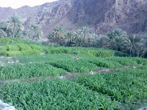 حرفة الزراعة من أهم الحرف التي يعتمد عليها السكان في حياتهم اليومية