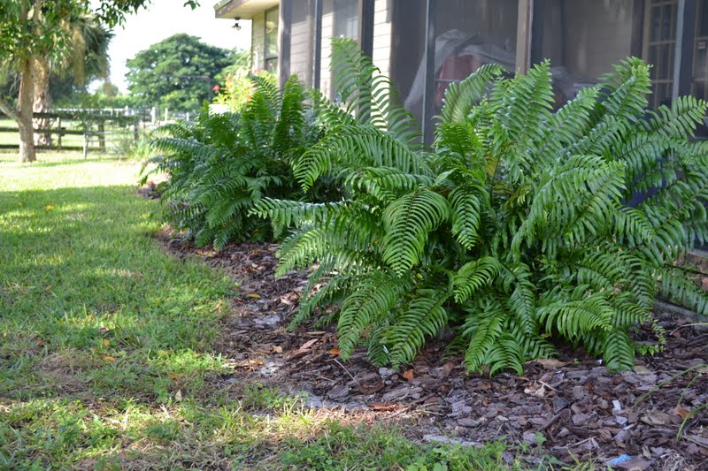 Landscaping With Ferns : Camelot art creations my mother s landscaping