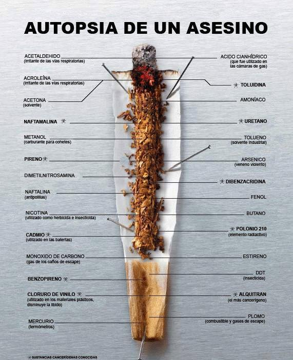 anatomia del tabaco