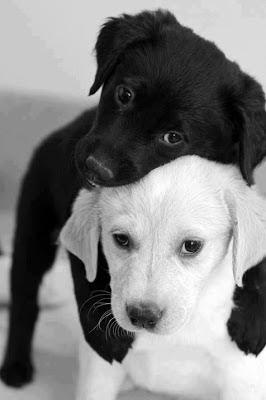 Foto de dos cachorros en blanco y negro