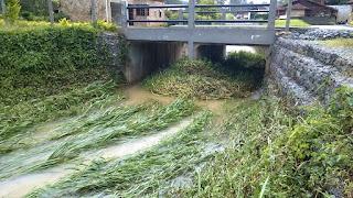 O Problema é agarrar lixo e madeira no Rio Principe