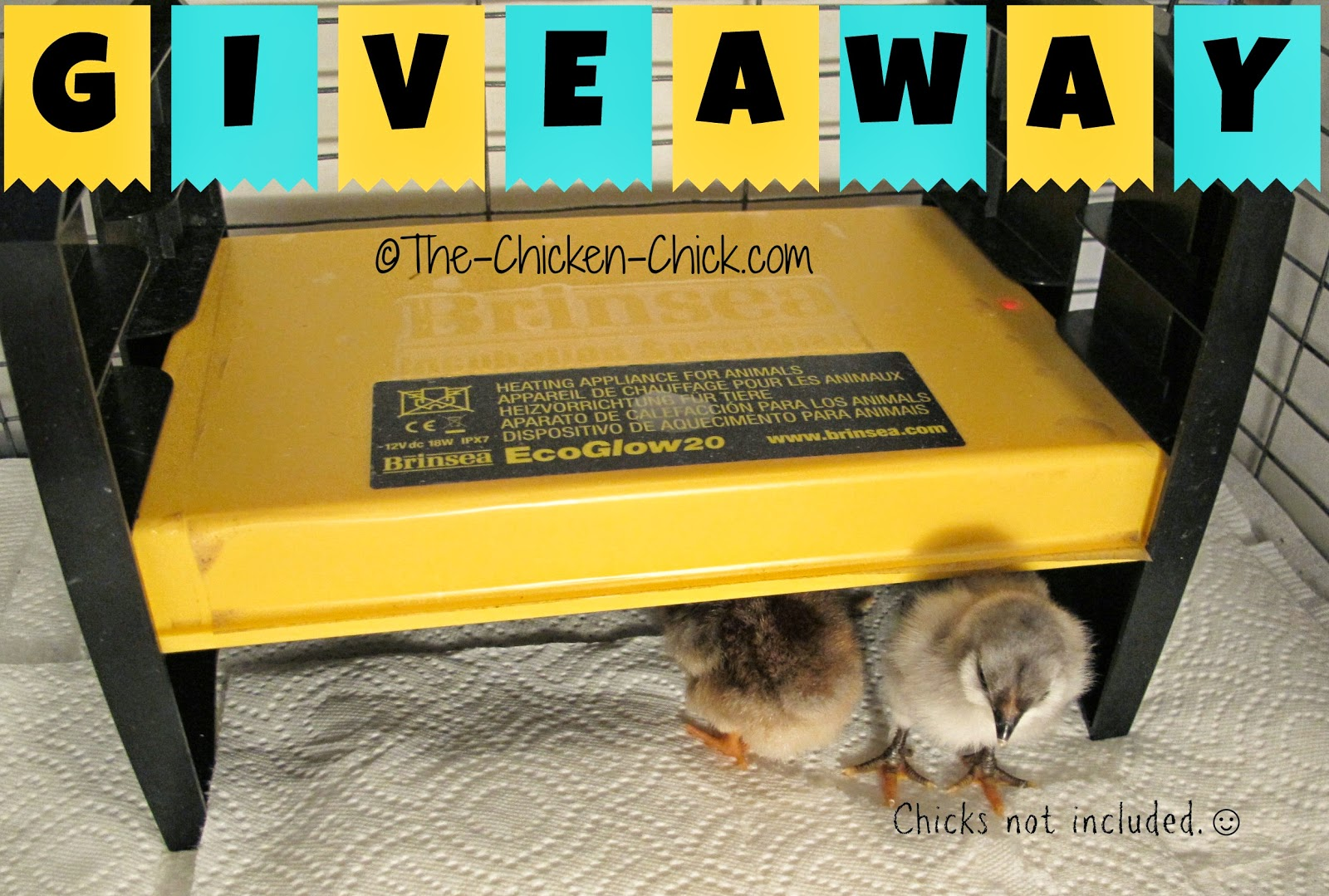 Brinsea EcoGlow Brooder Giveaway at The-Chicken-Chick.com