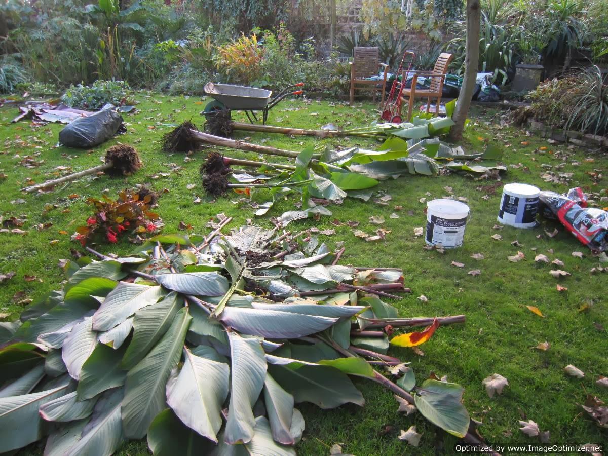 rambling towards an exotic garden paradise preparing for winter