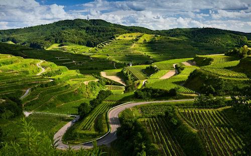 Laberintos de campos verdes - Green fields labyrinth - Vert labyrinthe des champs