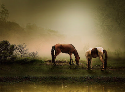 Caballos comiendo - Horses eating