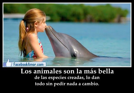 Imagenes de amor de animales para facebook Imagenes