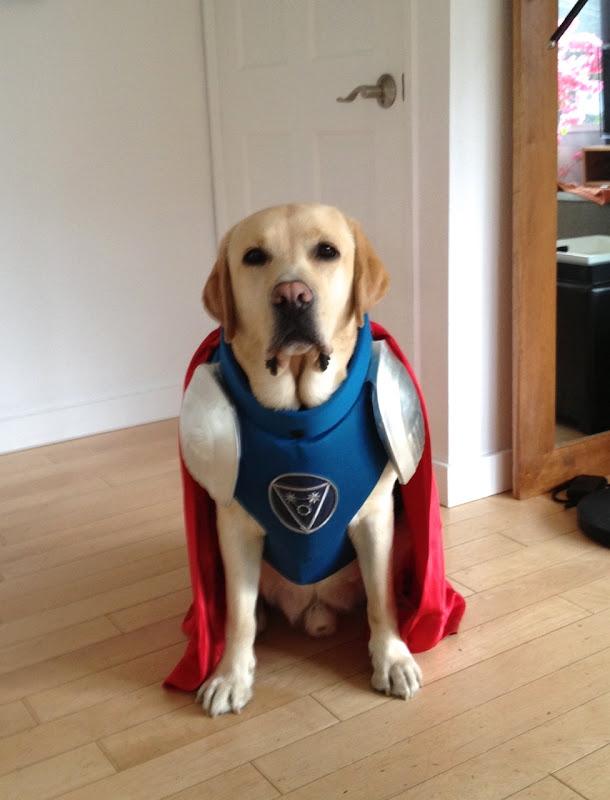 Superhero Labrador Cooper