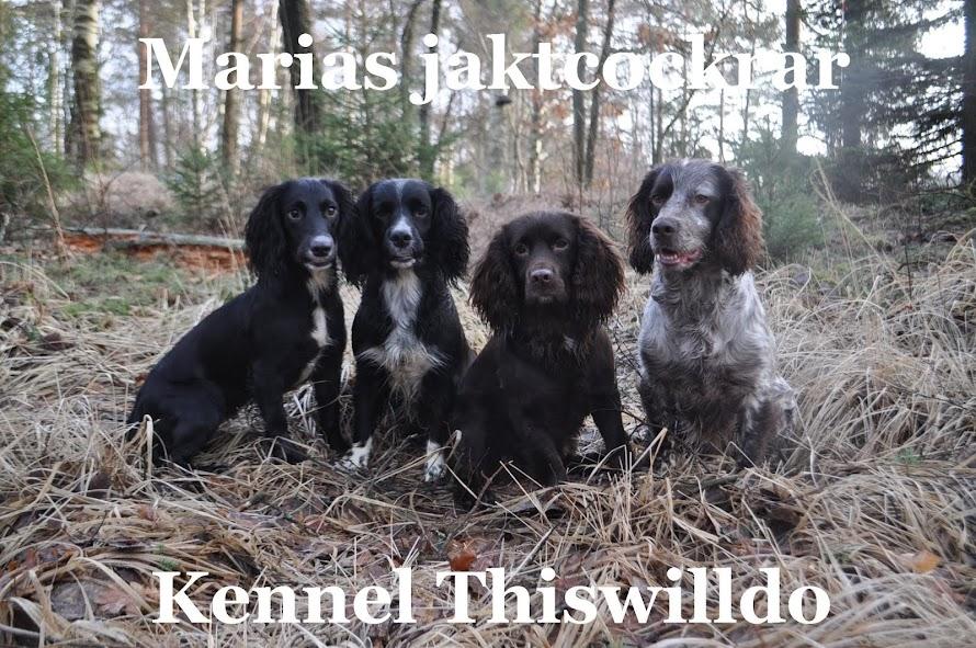 Marias Jaktcockrar - Kennel Thiswilldo