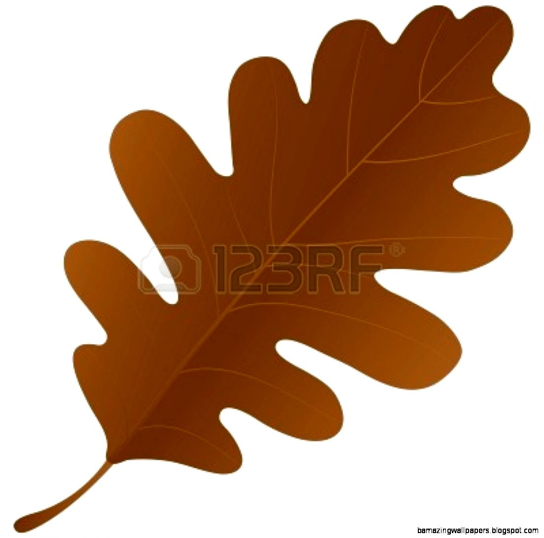 Oak Leaf Autumn Oak Leaf   Clipart Kid