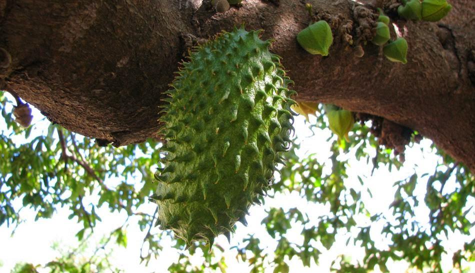 Asociación Casa de Perú en las Pitiusas: Frutas del Amazonas del Perú