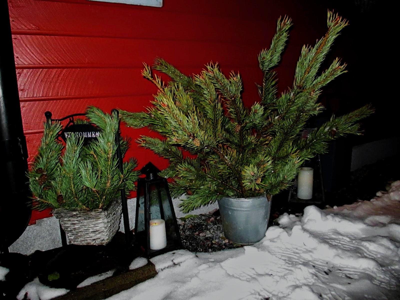Jul i norr Jul fint på gården