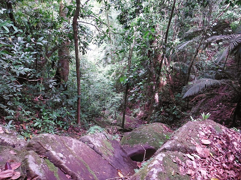 Phang Nga trekking trails