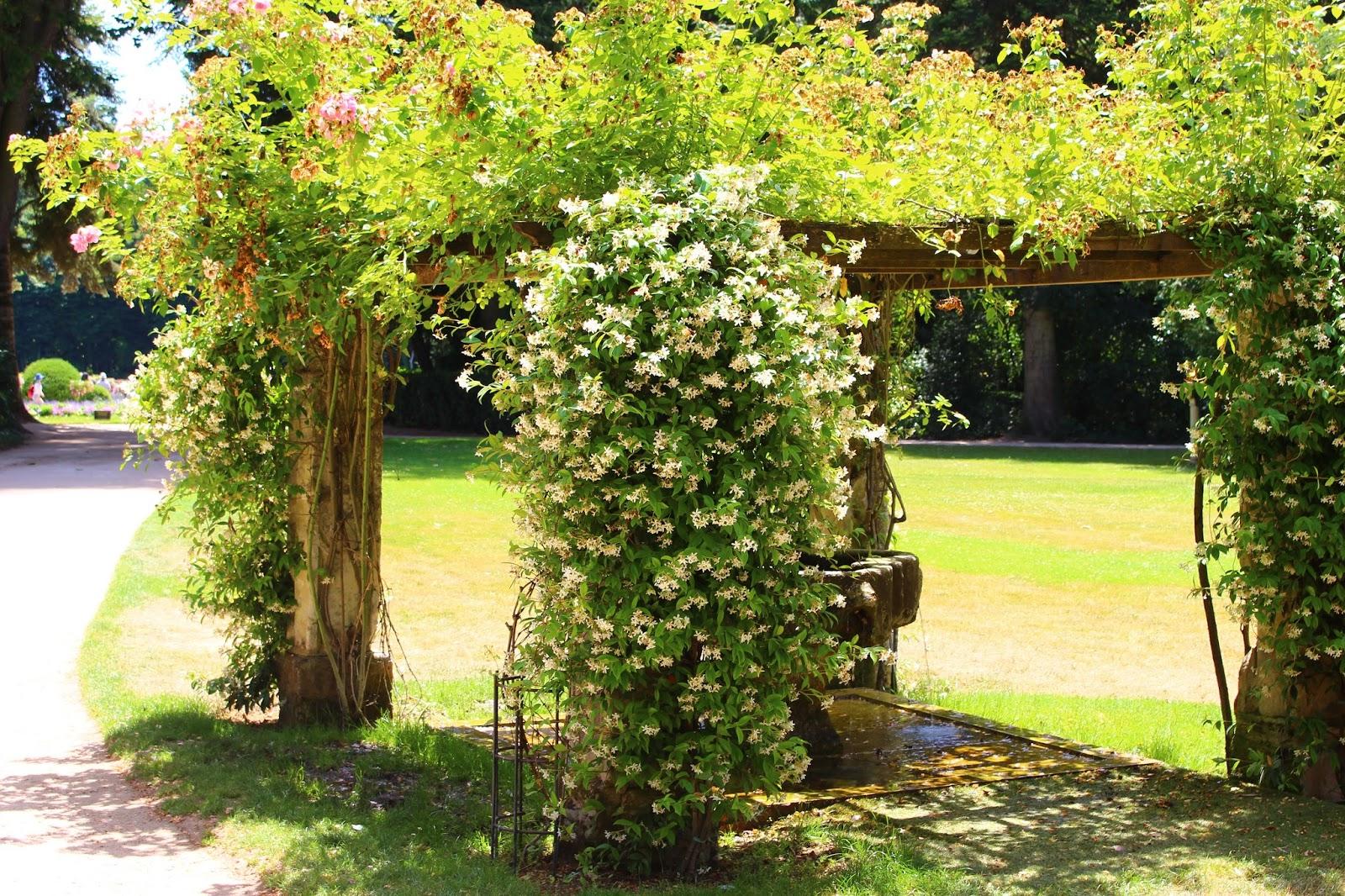 Roses du jardin ch neland jardin vert au ch teau de - Jardin de chen ...