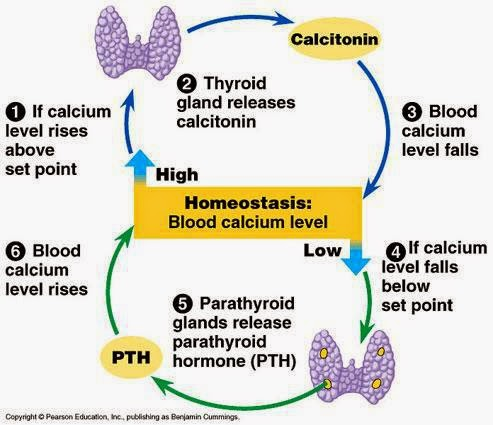 medical physiology: february 2015