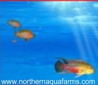northern aqua farms fish in water logo