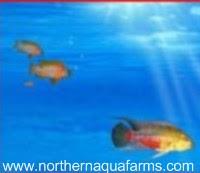 northern aqua farms fish in water logo