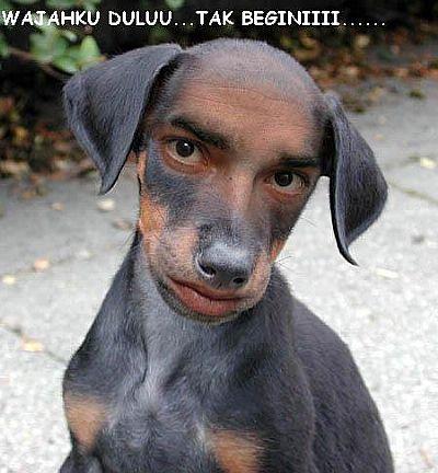Anjing ganteng