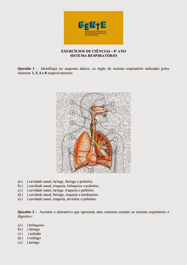 Atividades de ciências 8 ano sistema respiratório