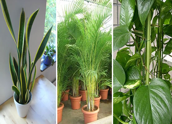 Alba hogar plantas de interior - Plantas pequenas de interior ...