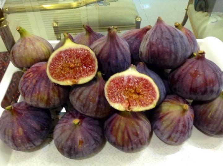 figs bonita springs