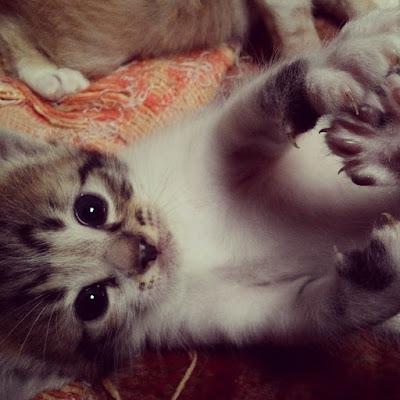 gambar-anak-kucing-lucu _ 02