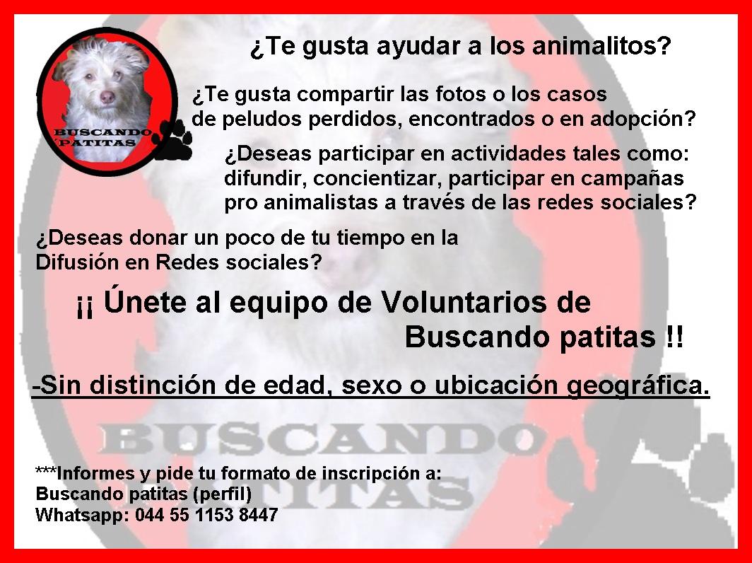 Voluntario en Redes Sociales