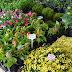Feira de Flores da Paraíba disponibiliza oficinas grátiz nesta quinta-feira