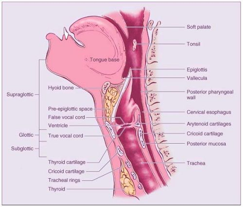 Throat Banatomy