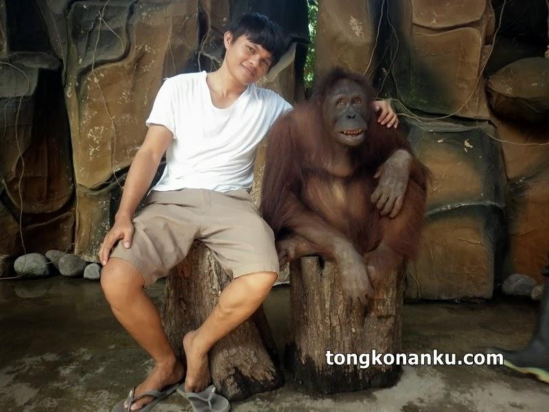 Orang Utan Kebung Binatang Gembira Loka Yogyakarta