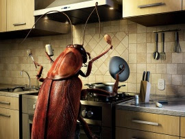 Bug in the Kitchen