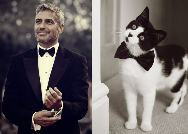 Cute Kittens and Handsome Men Paired Up On Tumblr1
