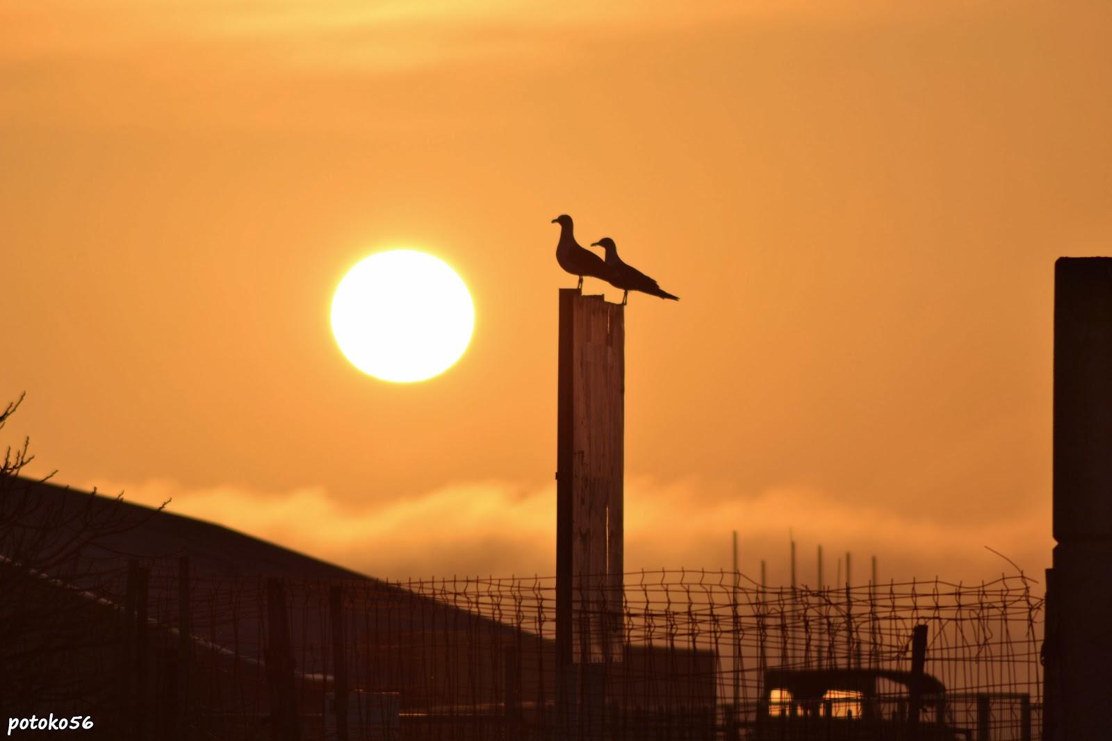 dos gaviotas contemplan la salida del sol Rota