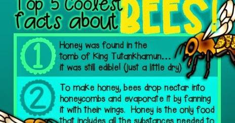 Green Grubs Garden Club: Top 5 coolest facts about... Honey Bees... Buuuzzzzzz!